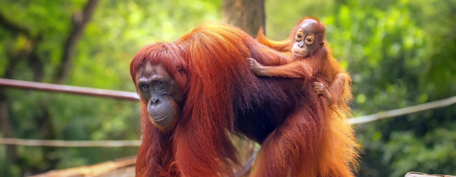 10 saker du måste uppleva i Malaysia & Borneo